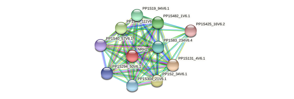 PP1S140_172V6.1 protein (Physcomitrella patens) - STRING interaction network