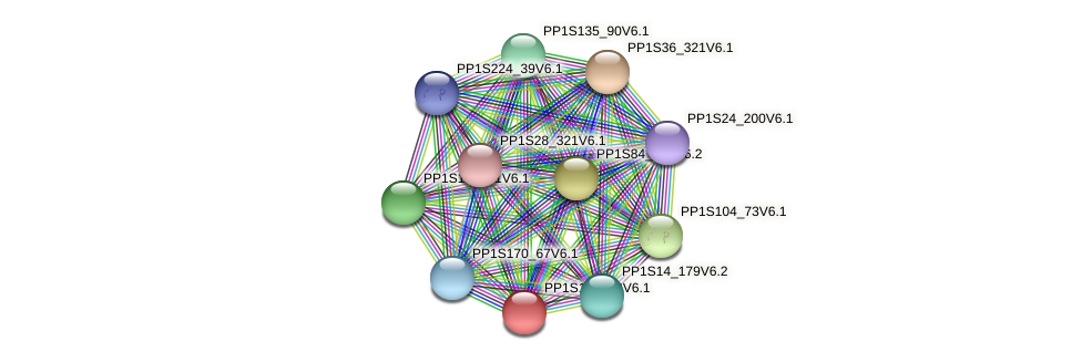 PP1S140_73V6.1 protein (Physcomitrella patens) - STRING interaction network