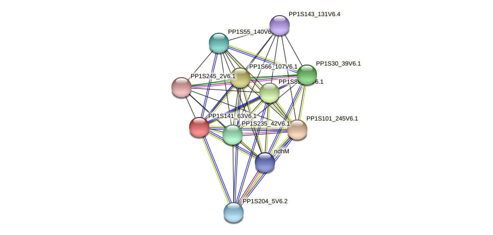 PP1S141_63V6.1 protein (Physcomitrella patens) - STRING interaction network