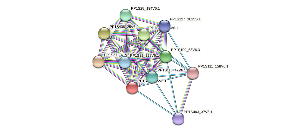 PP1S142_15V6.1 protein (Physcomitrella patens) - STRING interaction network