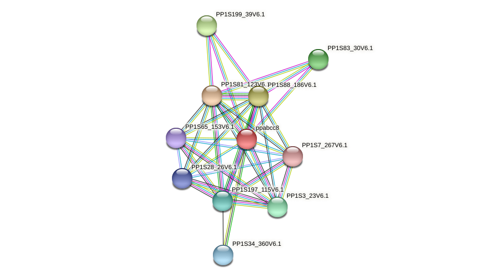 ppabcc8 protein (Physcomitrella patens) - STRING interaction network