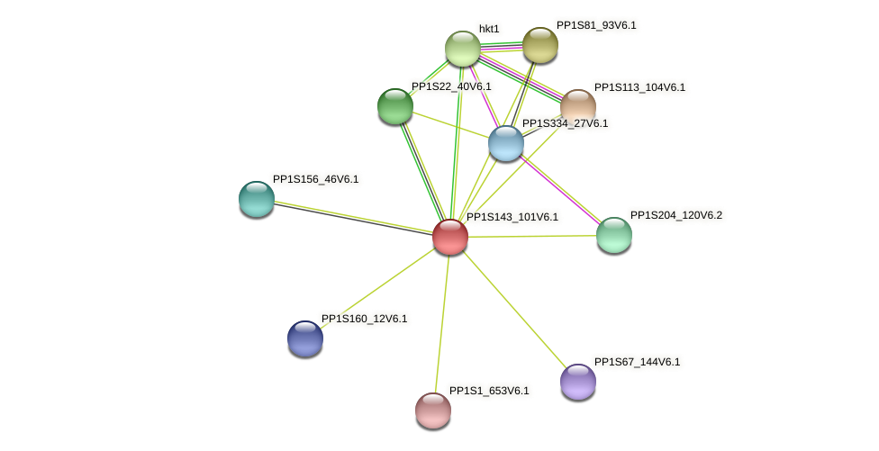 PP1S143_101V6.1 protein (Physcomitrella patens) - STRING interaction network