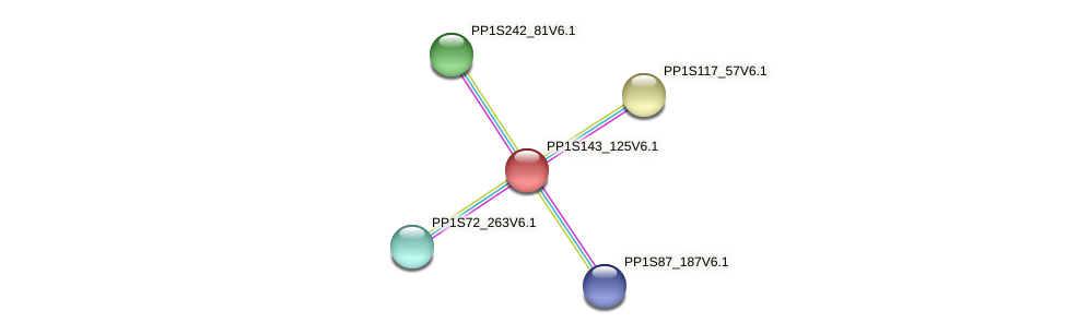 PP1S143_125V6.1 protein (Physcomitrella patens) - STRING interaction network