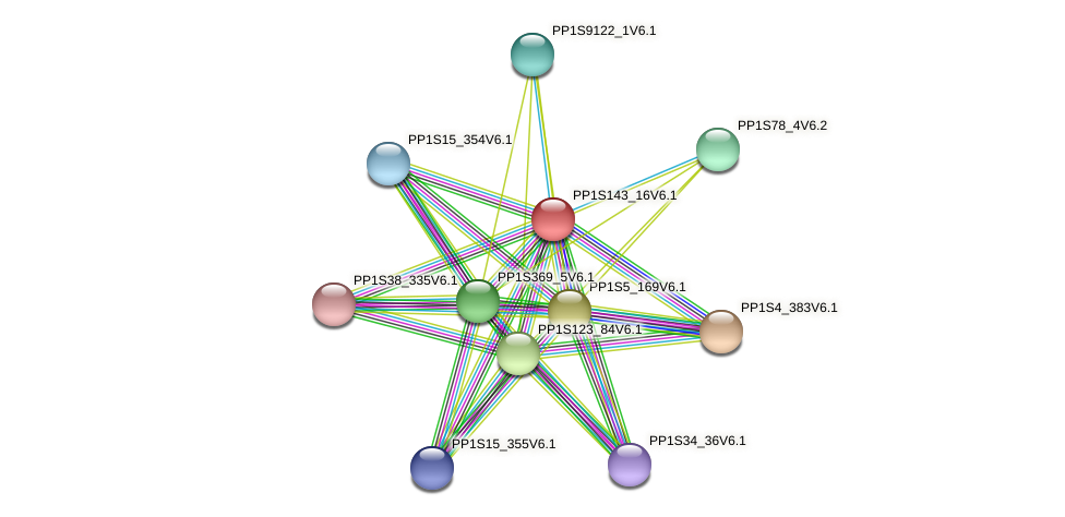 PP1S143_16V6.1 protein (Physcomitrella patens) - STRING interaction network