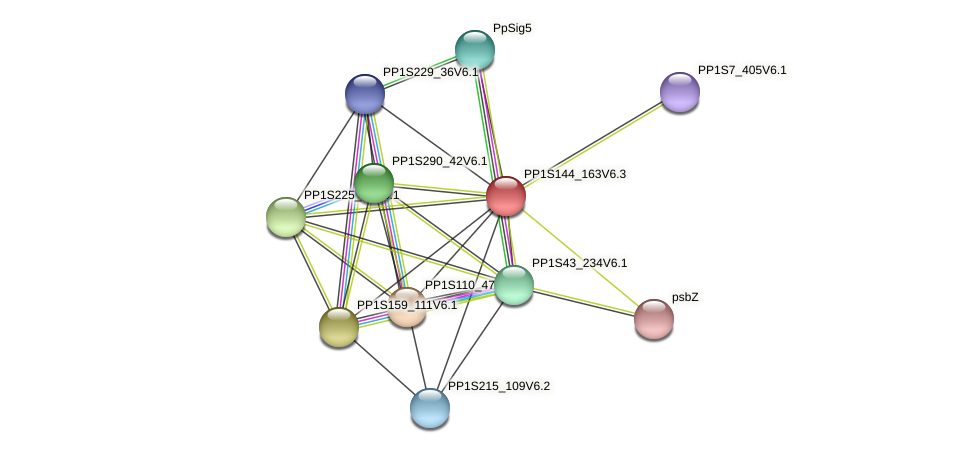 PP1S144_163V6.1 protein (Physcomitrella patens) - STRING interaction network