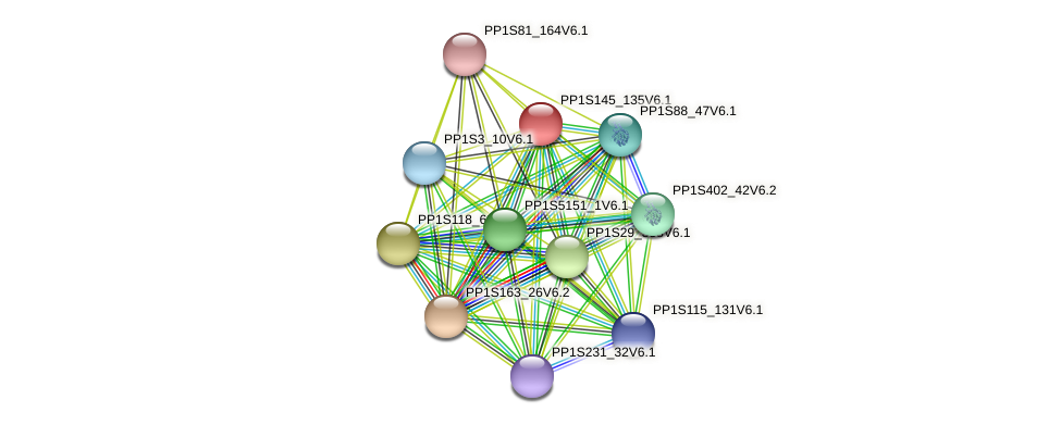 PP1S145_135V6.1 protein (Physcomitrella patens) - STRING interaction network