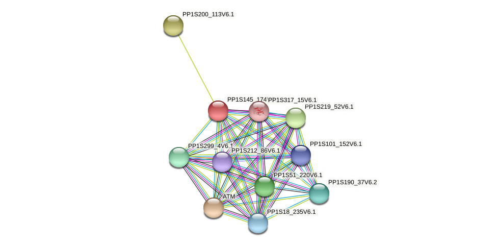 PP1S145_174V6.1 protein (Physcomitrella patens) - STRING interaction network