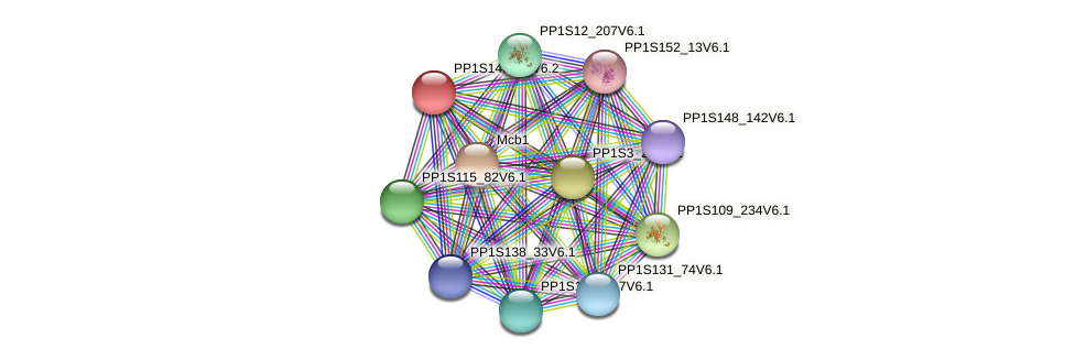PP1S146_15V6.1 protein (Physcomitrella patens) - STRING interaction network