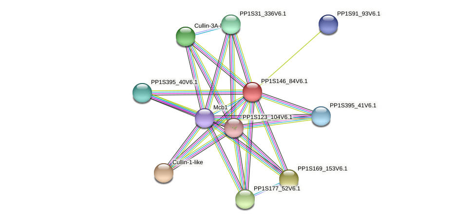 PP1S146_84V6.1 protein (Physcomitrella patens) - STRING interaction network