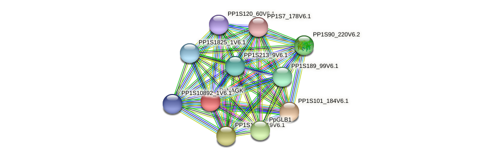 PpNAGK protein (Physcomitrella patens) - STRING interaction network
