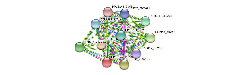 PP1S147_111V6.1 protein (Physcomitrella patens) - STRING interaction network