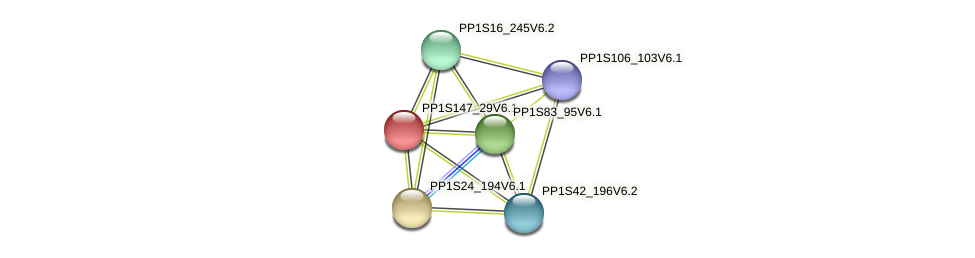 PP1S147_29V6.1 protein (Physcomitrella patens) - STRING interaction network