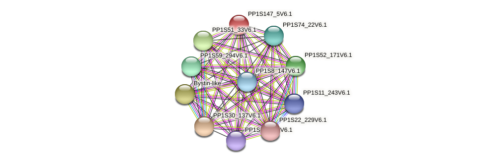 PP1S147_5V6.1 protein (Physcomitrella patens) - STRING interaction network