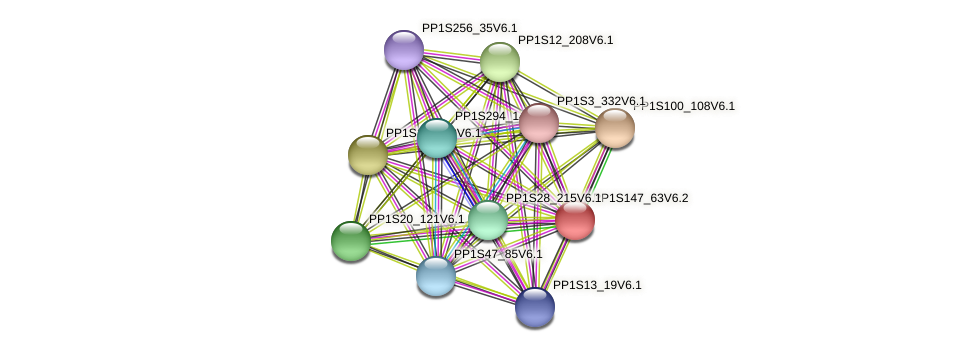 PP1S147_63V6.1 protein (Physcomitrella patens) - STRING interaction network