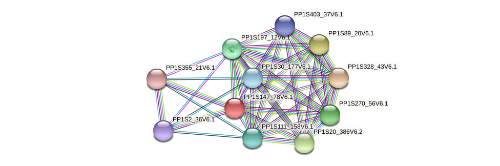 PP1S147_78V6.1 protein (Physcomitrella patens) - STRING interaction network