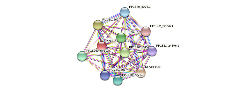 PP1S148_49V6.1 protein (Physcomitrella patens) - STRING interaction network