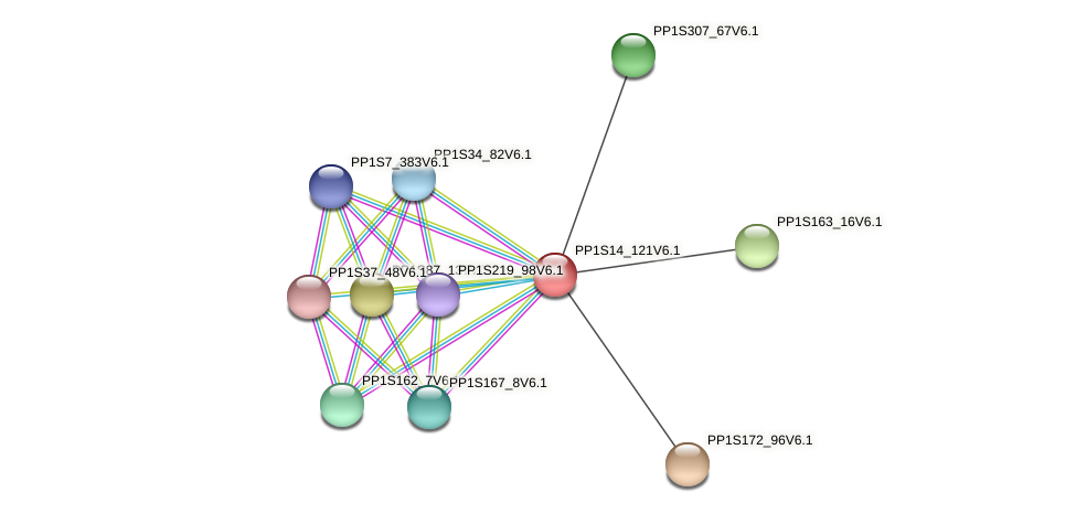 PP1S14_121V6.1 protein (Physcomitrella patens) - STRING interaction network