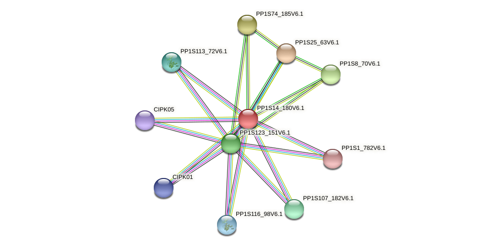 PP1S14_180V6.1 protein (Physcomitrella patens) - STRING interaction network