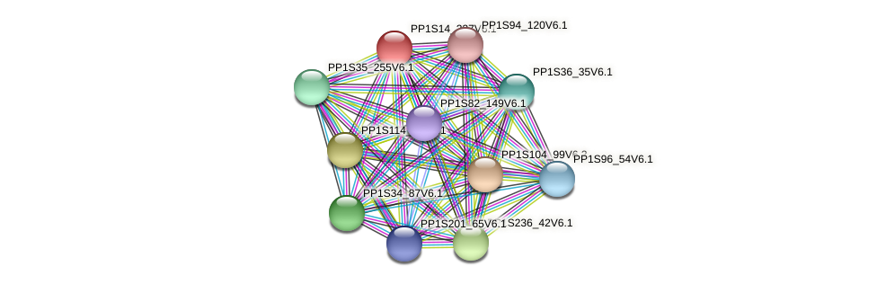 PP1S14_237V6.1 protein (Physcomitrella patens) - STRING interaction network