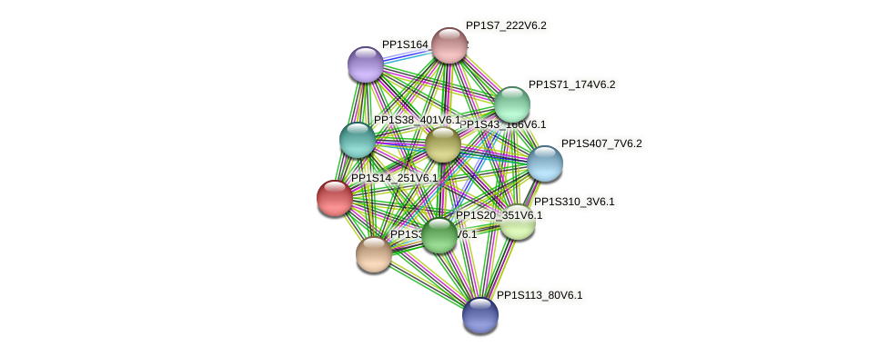 PP1S14_251V6.1 protein (Physcomitrella patens) - STRING interaction network