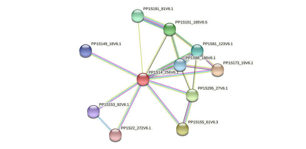 PP1S14_256V6.1 protein (Physcomitrella patens) - STRING interaction network