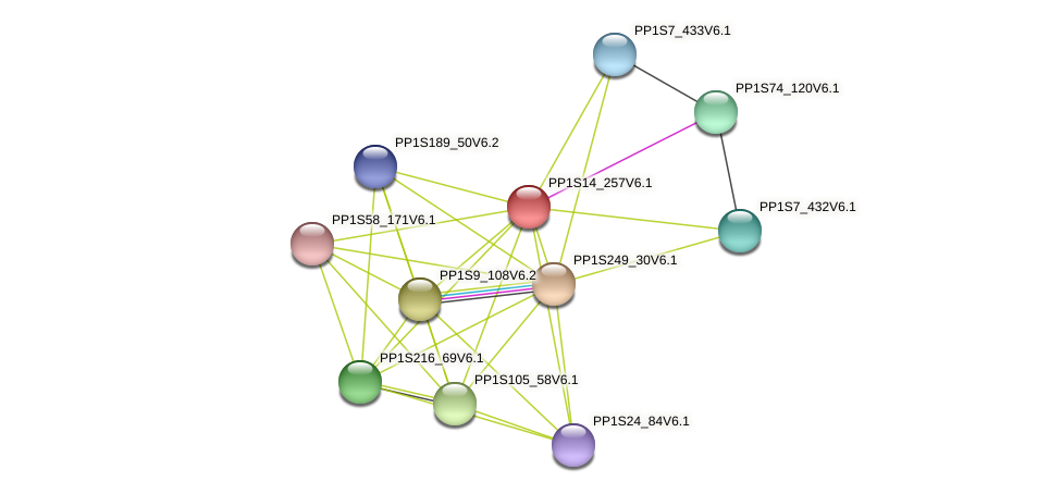 PP1S14_257V6.1 protein (Physcomitrella patens) - STRING interaction network