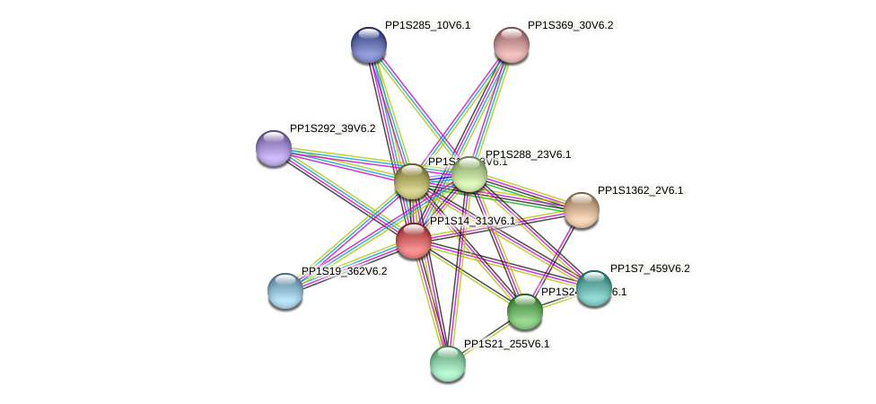 PP1S14_313V6.1 protein (Physcomitrella patens) - STRING interaction network