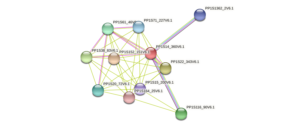PP1S14_360V6.1 protein (Physcomitrella patens) - STRING interaction network