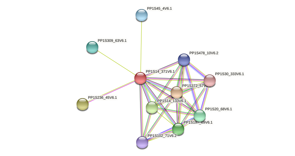 PP1S14_371V6.1 protein (Physcomitrella patens) - STRING interaction network