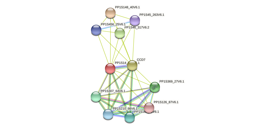 PP1S14_419V6.1 protein (Physcomitrella patens) - STRING interaction network