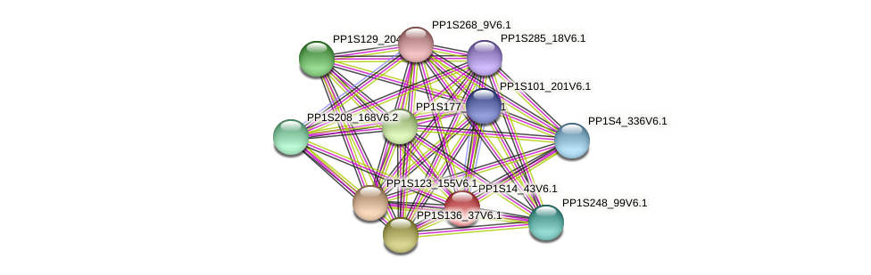 PP1S14_43V6.1 protein (Physcomitrella patens) - STRING interaction network
