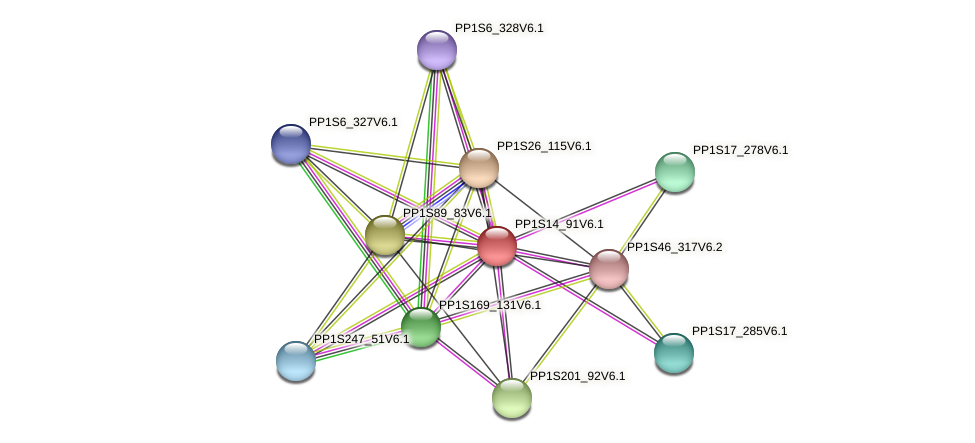 PP1S14_91V6.1 protein (Physcomitrella patens) - STRING interaction network