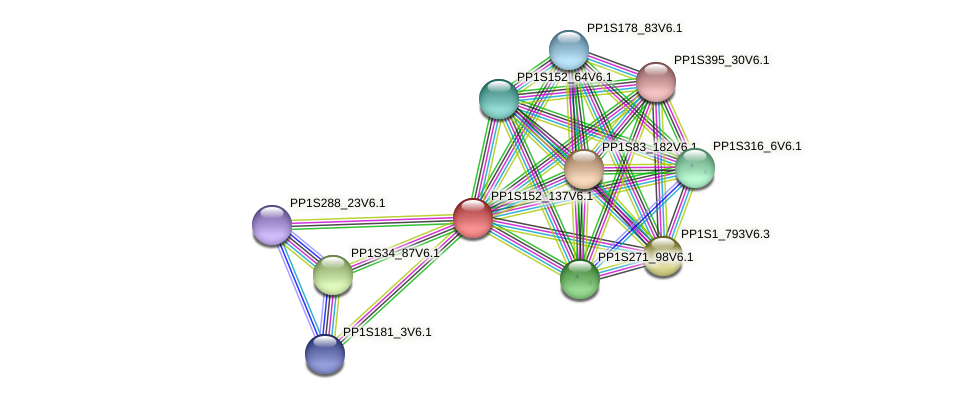 PP1S152_137V6.1 protein (Physcomitrella patens) - STRING interaction network