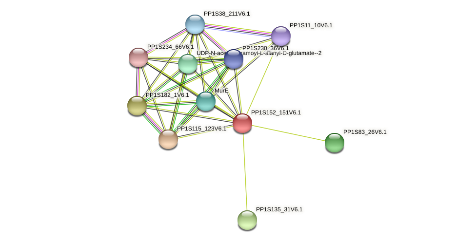 PP1S152_151V6.1 protein (Physcomitrella patens) - STRING interaction network