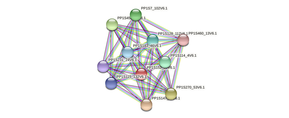 PP1S152_90V6.1 protein (Physcomitrella patens) - STRING interaction network