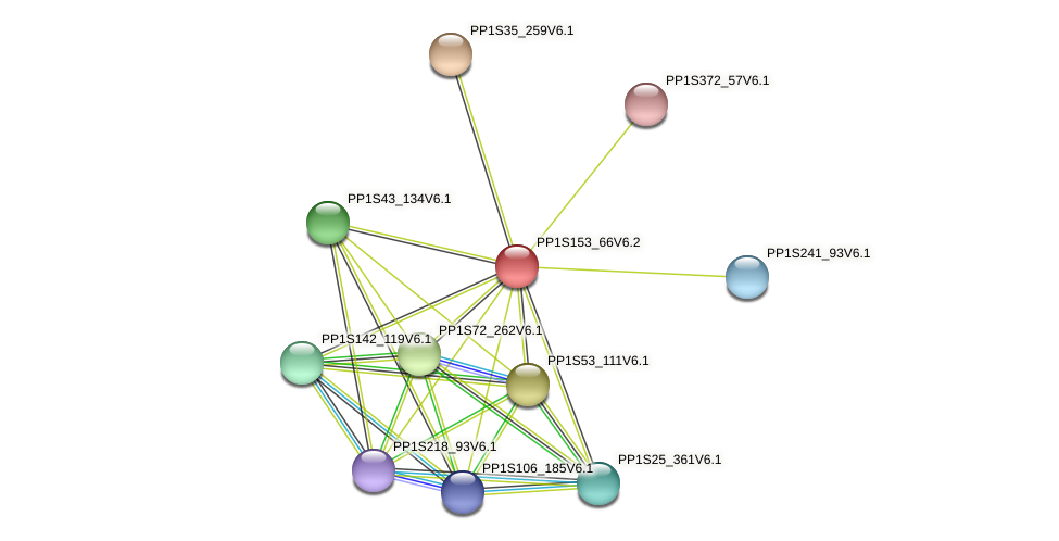 PP1S153_66V6.1 protein (Physcomitrella patens) - STRING interaction network