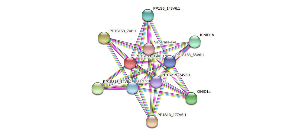 PP1S153_95V6.1 protein (Physcomitrella patens) - STRING interaction network
