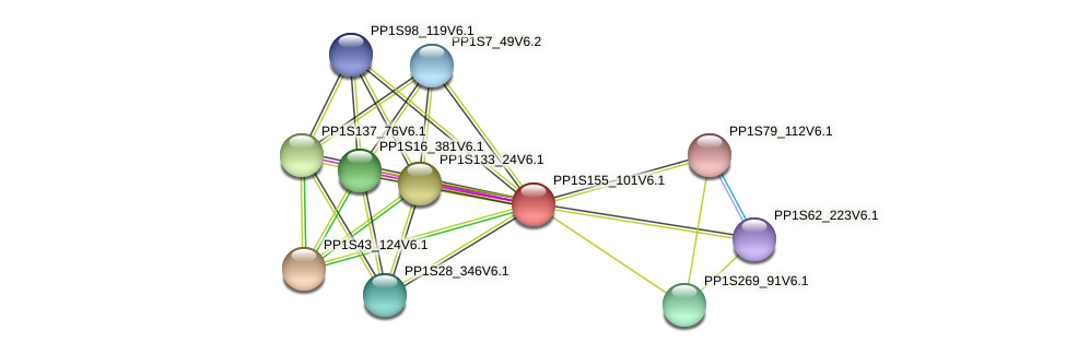 PP1S155_101V6.1 protein (Physcomitrella patens) - STRING interaction network