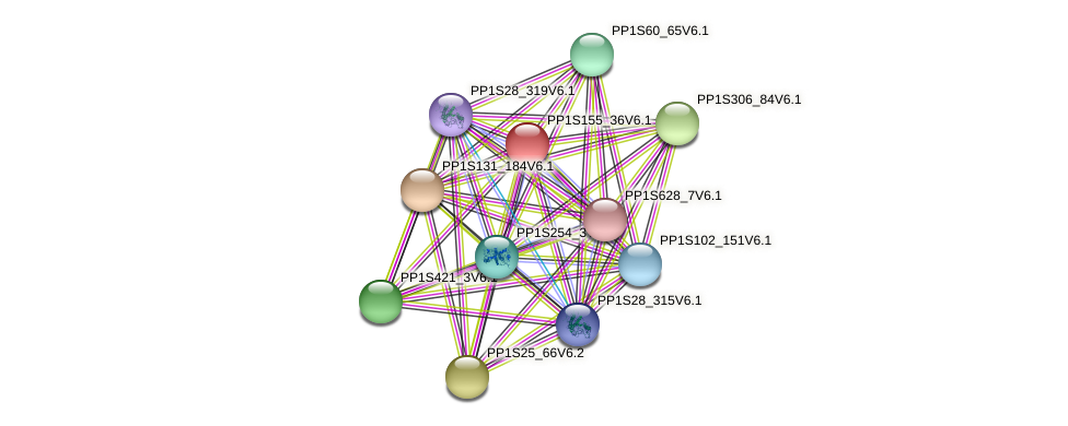 PP1S155_36V6.1 protein (Physcomitrella patens) - STRING interaction network