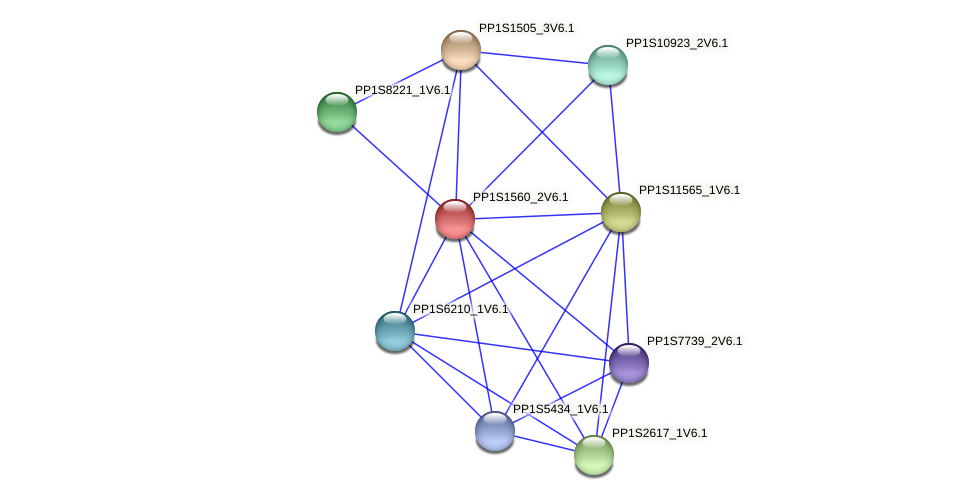 PP1S1560_2V6.1 protein (Physcomitrella patens) - STRING interaction network