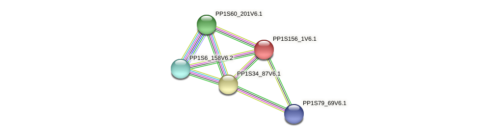 PP1S156_1V6.1 protein (Physcomitrella patens) - STRING interaction network
