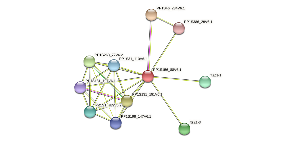 PP1S156_88V6.1 protein (Physcomitrella patens) - STRING interaction network