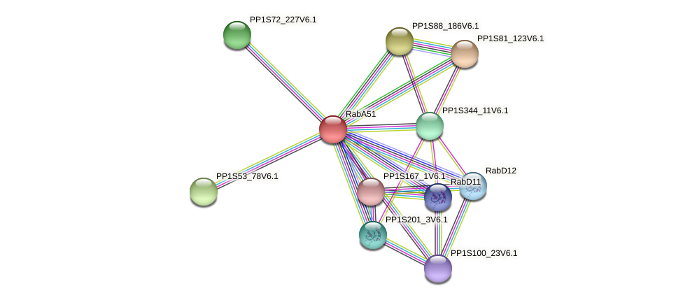 RabA51 protein (Physcomitrella patens) - STRING interaction network