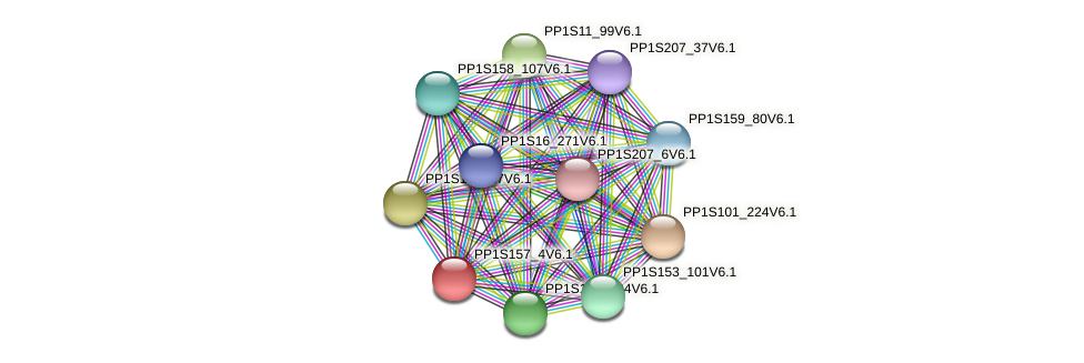 PP1S157_4V6.1 protein (Physcomitrella patens) - STRING interaction network