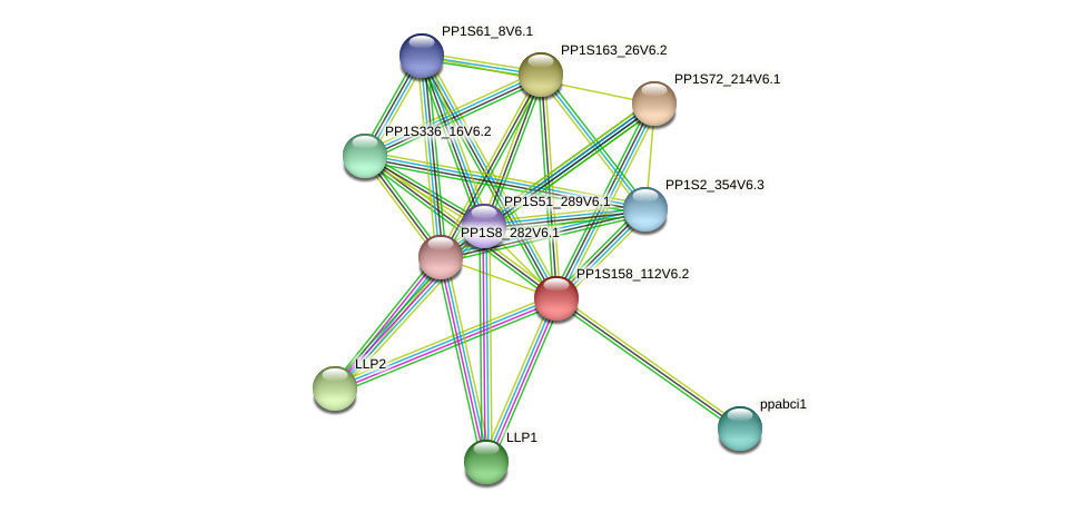 PP1S158_112V6.1 protein (Physcomitrella patens) - STRING interaction network