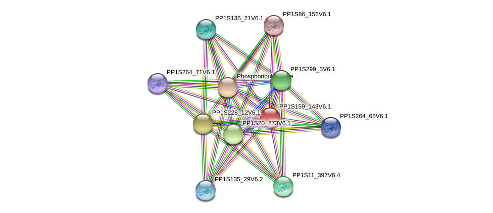 PP1S159_143V6.1 protein (Physcomitrella patens) - STRING interaction network