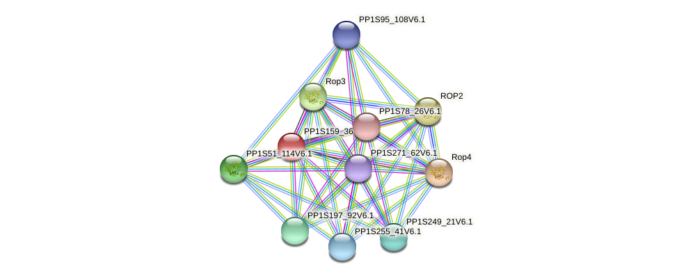 PP1S159_36V6.1 protein (Physcomitrella patens) - STRING interaction network