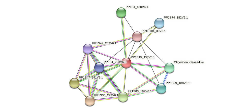 PP1S15_157V6.1 protein (Physcomitrella patens) - STRING interaction network