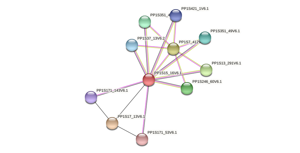 PP1S15_16V6.1 protein (Physcomitrella patens) - STRING interaction network