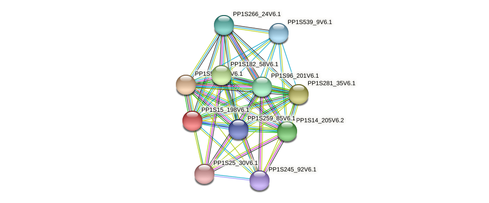 PP1S15_198V6.1 protein (Physcomitrella patens) - STRING interaction network